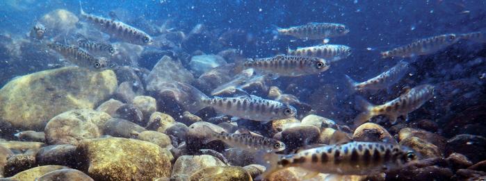 fish-pano