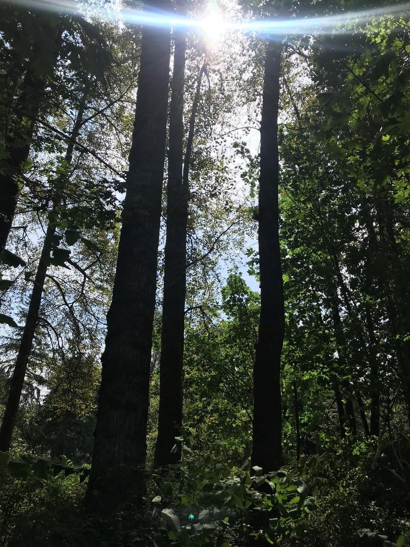2019-nw-trees.jpg